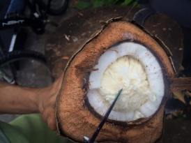 Eat Raw! Plant Coco Trees Please!