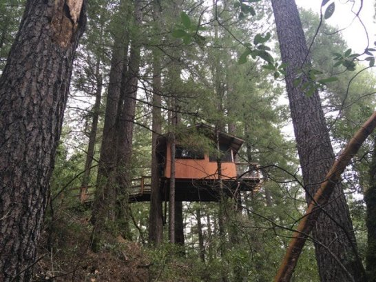 Built Tree Houses!